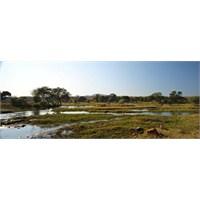Ruaha Ulusal Parkı – Tanzanya