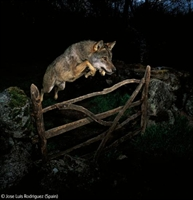 2009 Yılının En İyi Vahşi Yaşam Fotoğrafları