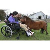 Atla Terapi Zihinsel Engelli Çocuklarda Stresi Aza