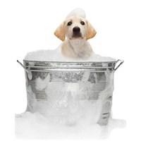 Köpeklerde Banyo