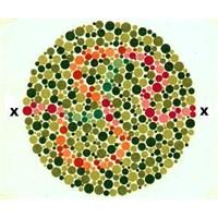 Göz Ve Renk Körlüğü Testi