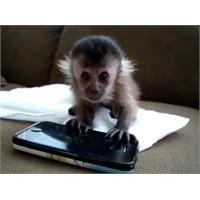 Bebek Maymun İphone İle Oynuyor