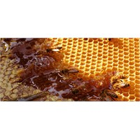 Arıların Petekleri Neden Altıgendir