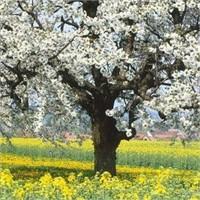 Bahar gelince ...
