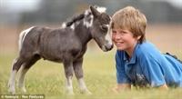 Hiç Bu Kadar Küçük Bir At Gördünüz Mü?