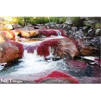 Caño Cristales Nehri – (Dünyanın en güzel nehri)