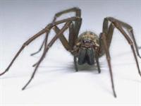 Örümceklerin İlginç Özellikleri