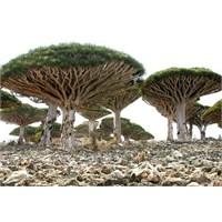 Sokotra Adası, Yemen