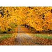 Sonbahar ve En Güzel Sonbahar Şarkıları