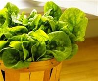 Vejeteryan Beslenme Gerçekten Sağlıklı Mı?