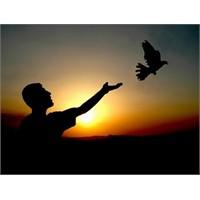 Sanal Dünya Özgürlüğü ...
