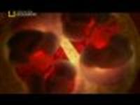 Canlı Doğum-- Video