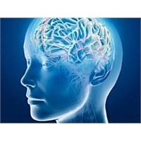 Kök Hücreden Beyin Üretilecek!