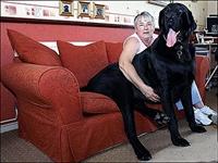 Devasa Köpekler