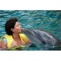 Meksika- Çözümel (Yunuslarla Yüzüş)