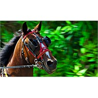 At Gözlüklü Olma Be Vatandaş