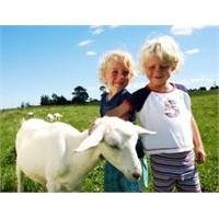 Keçi sütünün faydaları nedir