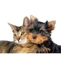 Kedi İle Köpek Bile Barıştılar Da…