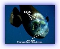 Transparan Balık