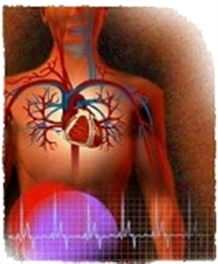 Diş Eti Enfeksiyonları Ve Kalp Krizi Ve Felç Riski