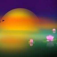 Lotus Çiçeği Ve Dün