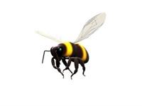 Günümüzün Hastalığı Ms'ye(multiple Skleroz) Arılar