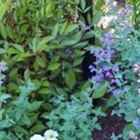 Cilt Ve Saç Bakımında Bitkilerin Önemi