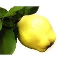 Kış Aylarının Şifalı Meyvesi