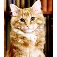 Kitap Okumayı Sevdiren Kedi: Dewey