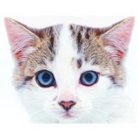 Kediler Nasıl Hep Dört Ayak Üzerine Düşerler?