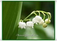Zehirli Çiçek Türleri
