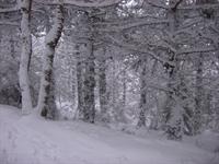 Kış Hastalıklarına Bıtkısel Cozum