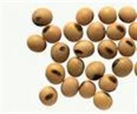 Kemik Erimesine Karşı:soya