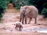 Filler Üzerine Araştırma.
