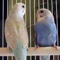 Kuş Dili Nedir? Nasıl Kuş Dili Konuşulur?