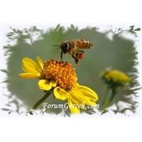 Arılarda Haberleşme | Arı Dansı