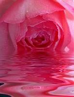 Gul Suyunun Cilde Faydalarini Biliyormusunuz?