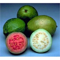 Mucize Meyve Guava