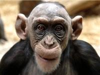 Maymunlar İle Akraba Çıktık