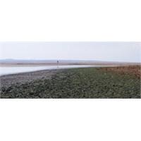 Kuyucuk Gölü Sulak Alan Restorasyon Projesi