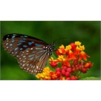 Küçük Kelebek Ve Çiçek