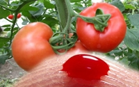 Sebzeler İle Organlarımız Arasındaki İlişki