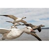 Ntv İle Kuş Bakışı Dünya