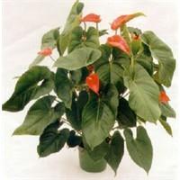 Hava Temzileyen Ev Bitkileri