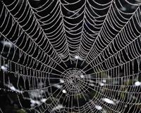 Örümcek Hayvanı