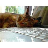 Kedilerimin Fotoğrafları