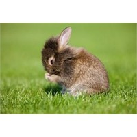 Tavşanların Vücut Dili