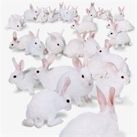 Tavşanlar Hakkında Kısa Bilgiler