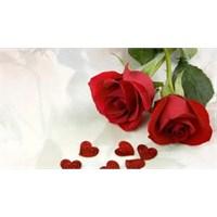 Güllerin Renkleri Ve Anlamları
