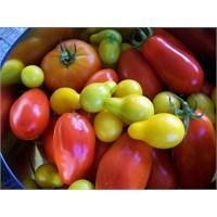 Evde Sebze İçin Toprak Hazırlama, Ekme Ve Çimlenme